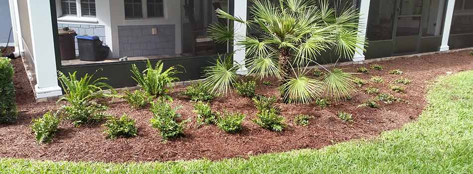 This landscape bed has had one of the popular mulches for the Spring Hill, FL area laid in it.