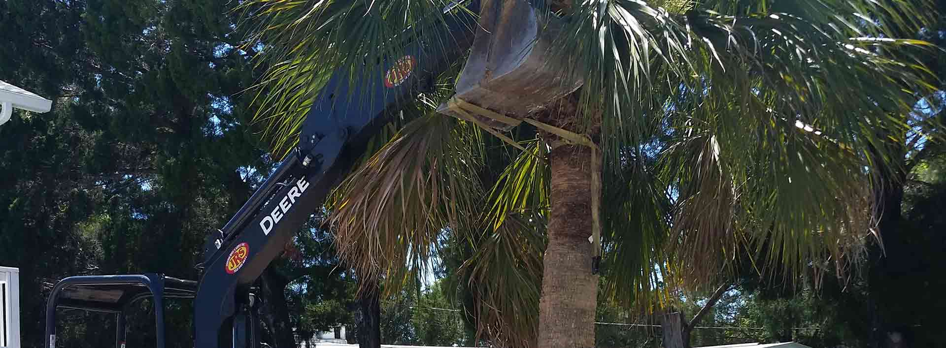 Palm tree being carefully placed into the landscape bed of a homeowner in Hernando Beach, FL.