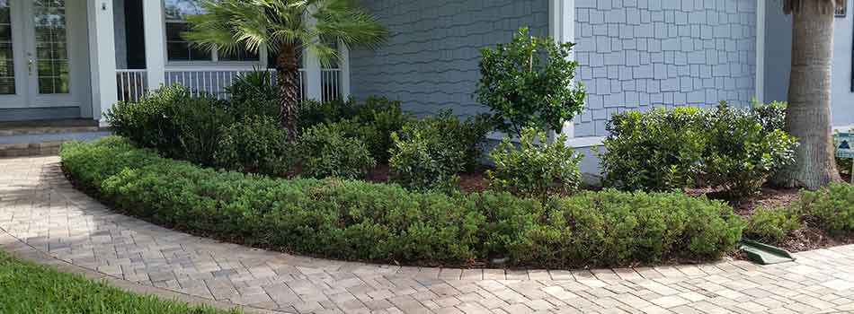 This homeowner's shrubs in Brooksville, FL appear well-groomed and healthy, thanks to the landscape trimming be provided as an extra service.