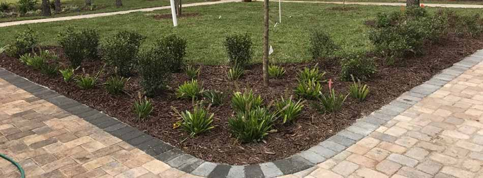 We have designed and installed both the landscape bed and the paver walkway for this homeowner in Spring Hill, FL.