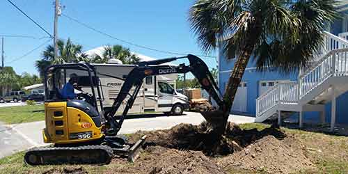Brooksville, FL homeowner having a palm tree removed from their landscaping.